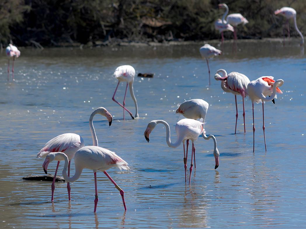 Provenza-Camargue-Parco-Ornitologico