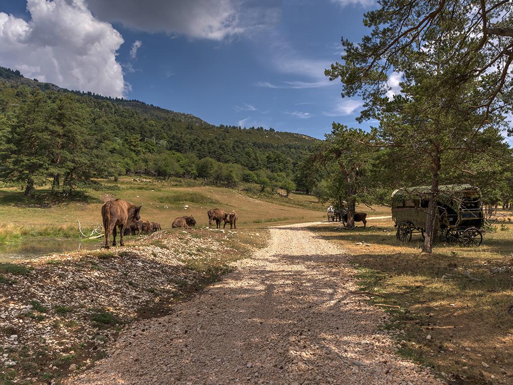 Provenza-Reserve-des-Monts-Azur