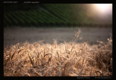 Sezione Soci (Fuori Concorso) - Portfolio di Raffaele Franco (1)