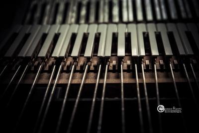 fisarmoniche-13